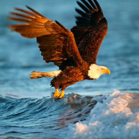 Animals Jigsaw Puzzle - Eagle